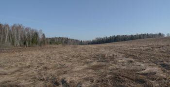 Подмосковный лес в апреле